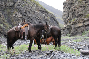 horse on hunting trip